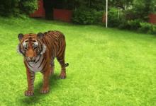 إليك كيفية إلقاء نظرة على الحيوانات بالحجم الطبيعي في الواقع المعزز!